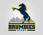 Brumbies-logo